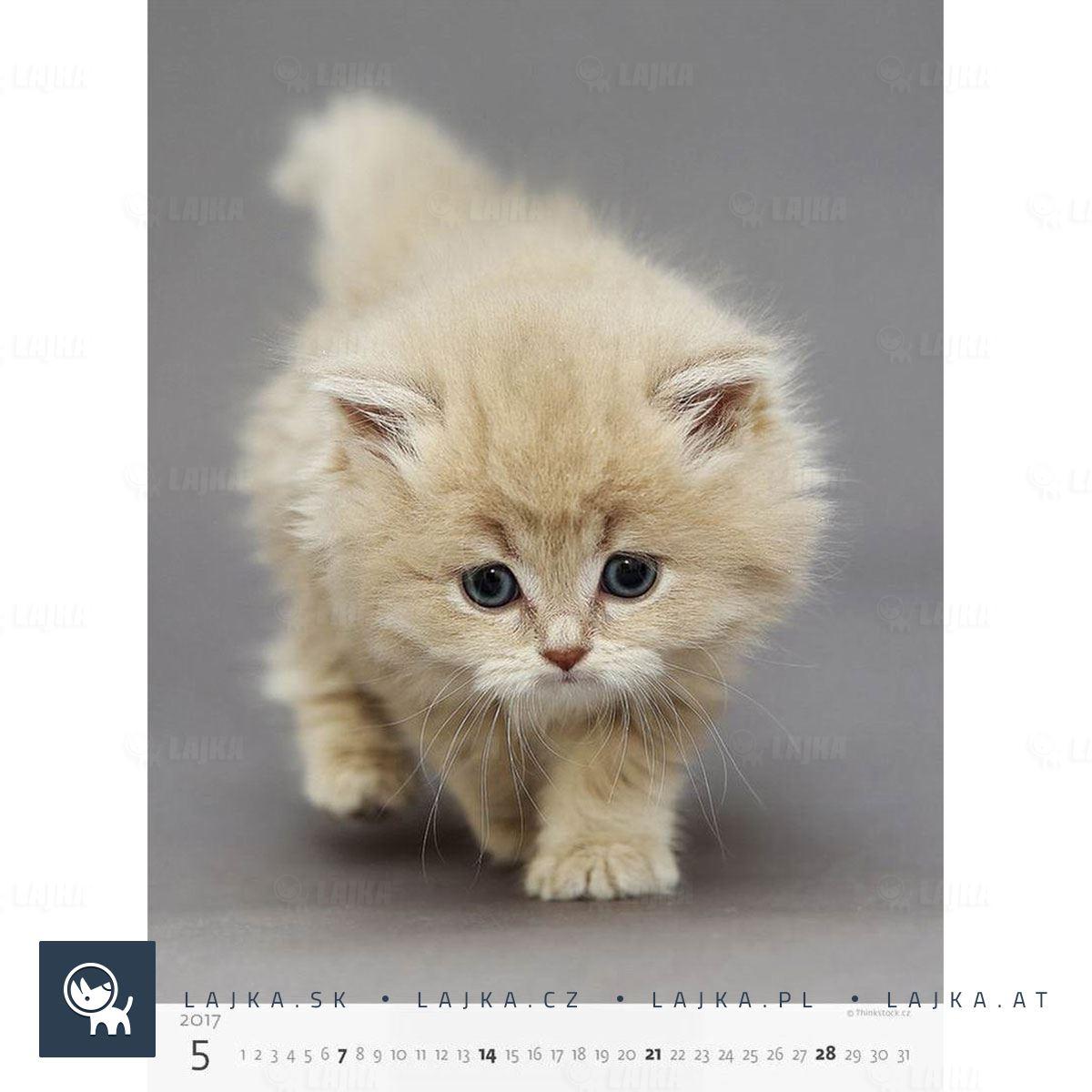 zadarmo mačička džbány